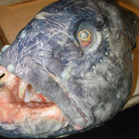 weird+fish+evil