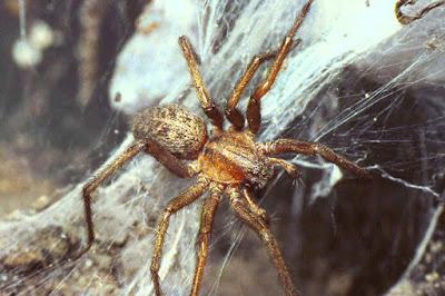 Spiders Invade Memphis