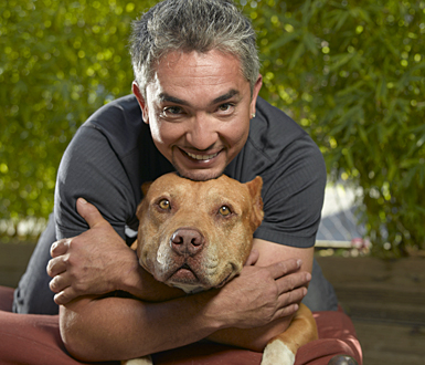 south park cesar millan deutsch