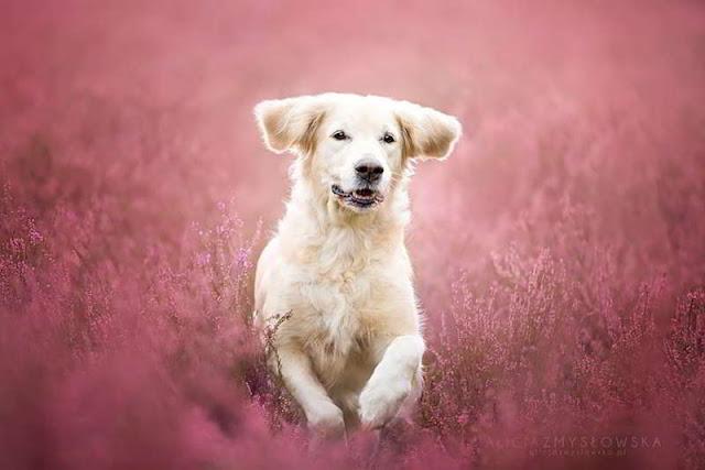 dog-photography-alicja-zmyslowska-16