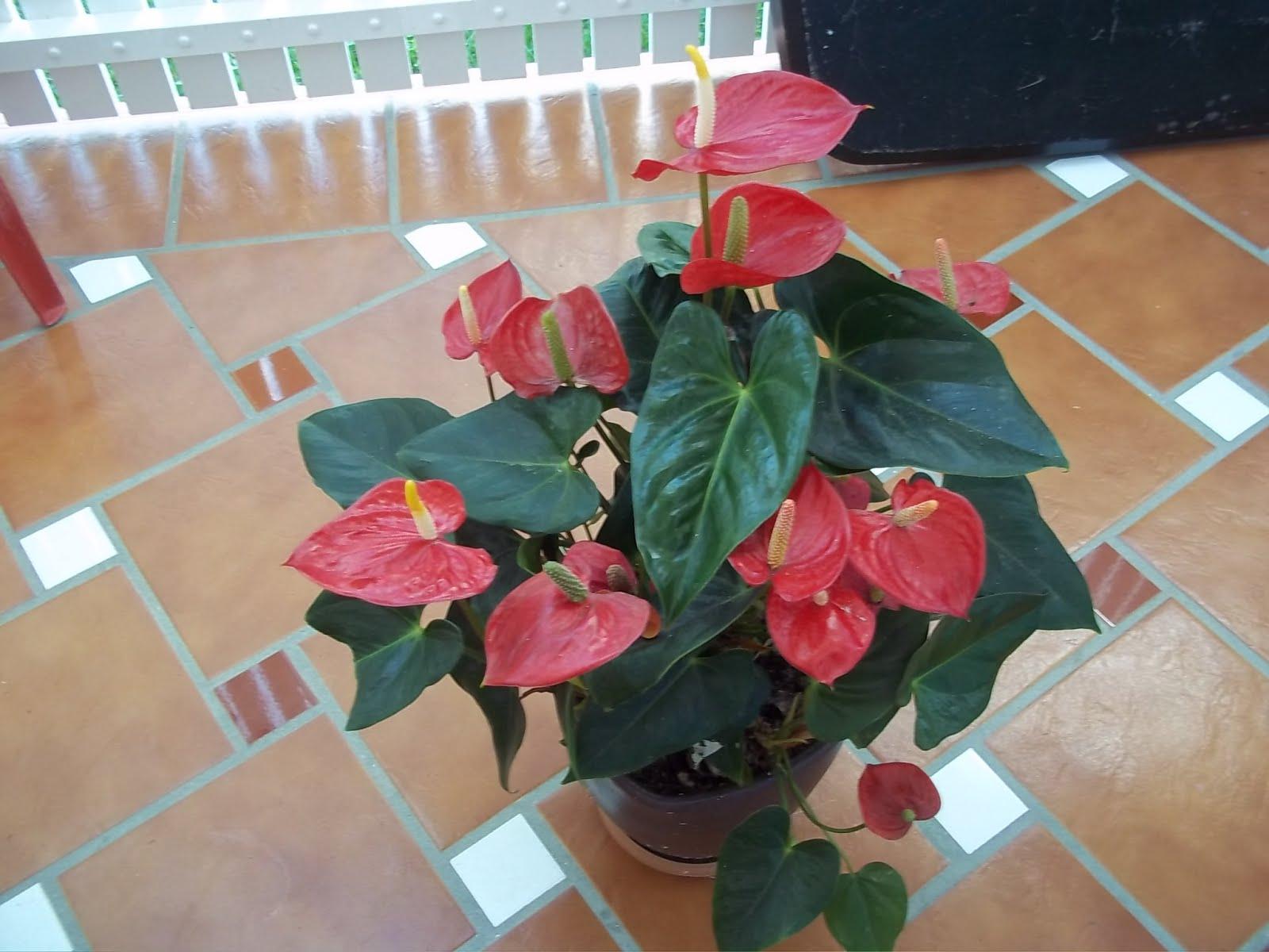 Plantas tropicales for Vivero plantas tropicales