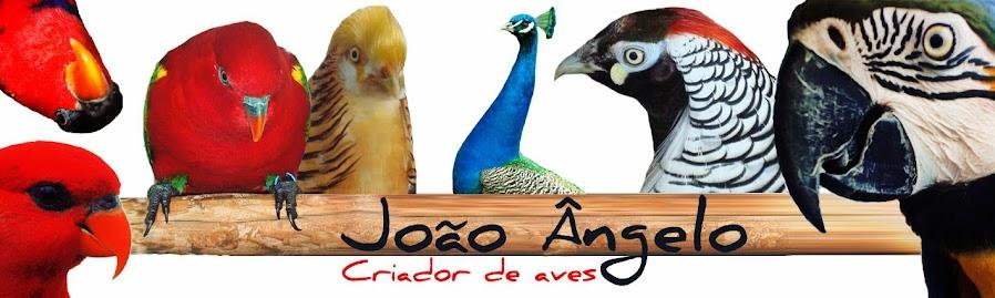 Aves João Ângelo