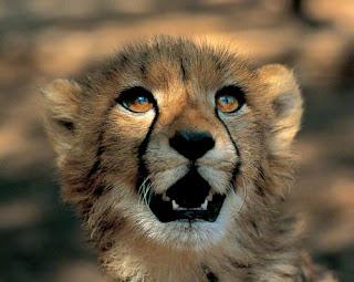 faune-afrique-du-sud