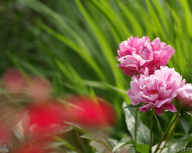 Flowers HD Desktop Wallpaper -09
