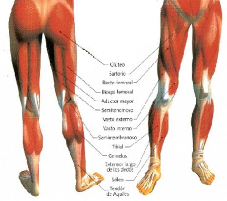 Fitness4you: Articulación de la cadera (II)
