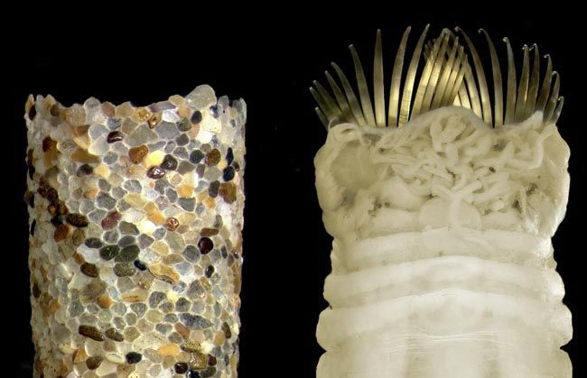 Real Monstrosities: Ice Cream Cone Worm