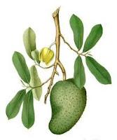 Obat herbal Penyakit Trigliserid