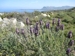 Wild Lavender, View toward Stavros, Crete, April 2016