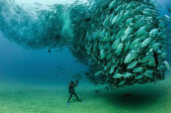 baile subacuatico de peces gato