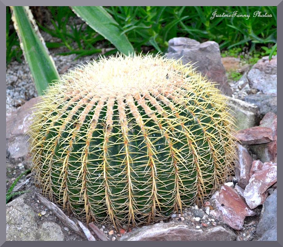 La galerie de fanny plantes exotiques for Plantes exotiques