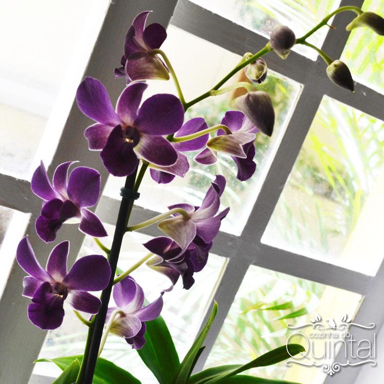 Orquídeas são minha paixão. Trazem paz =)