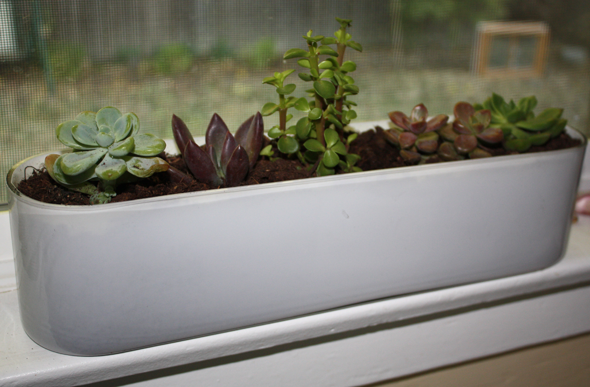 A windowsill garden Tall narrow indoor plants