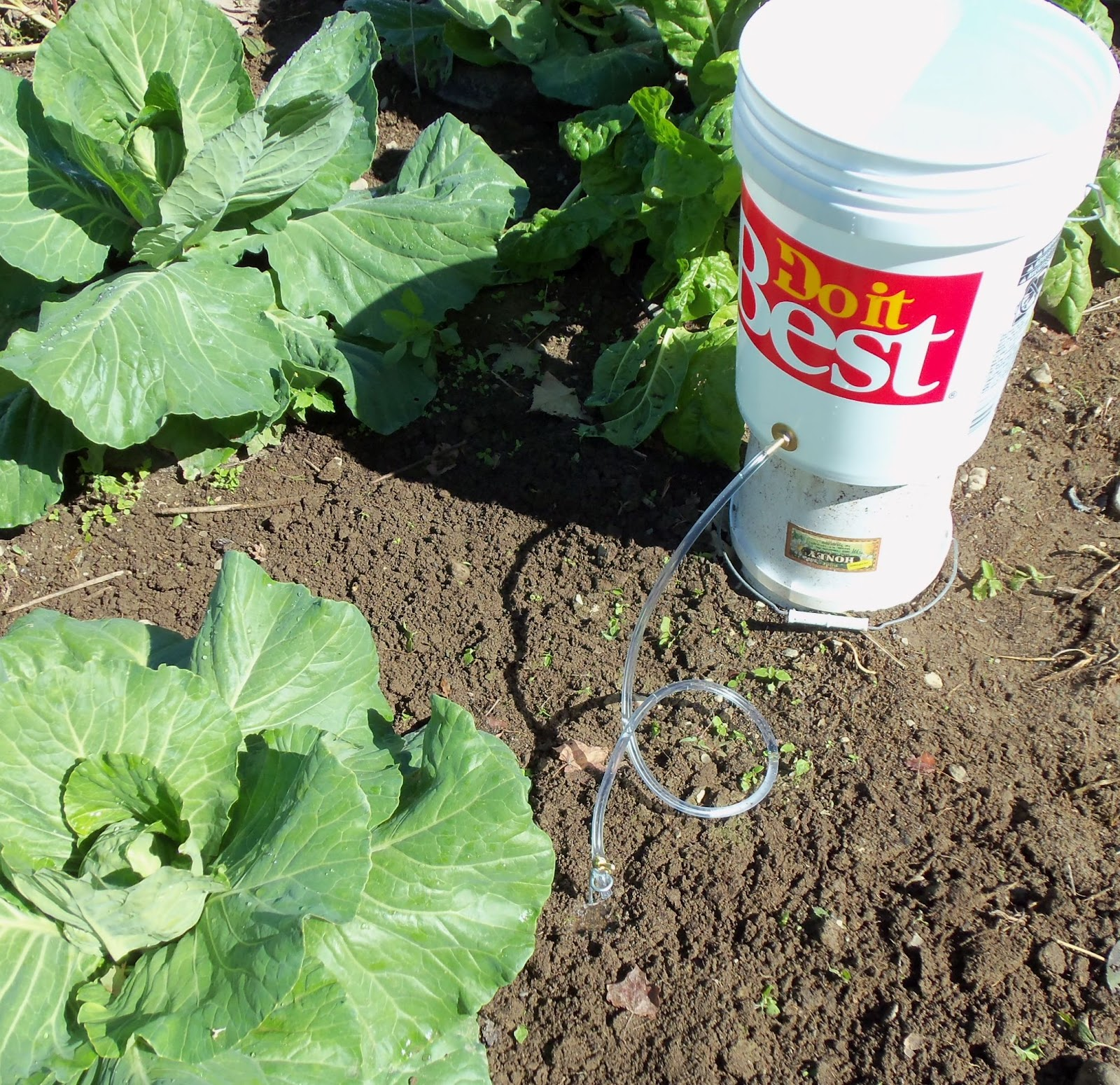 Www bucket - Diy drip irrigation systems ...