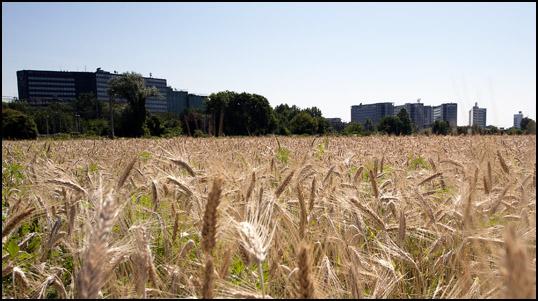 Unaranaparlante parco agricolo sud milano variante del for Piani di fattoria del sud