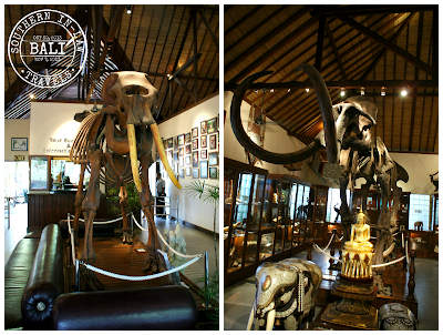 Elephant Safari Park Taro Bali Review - Elephant Museum