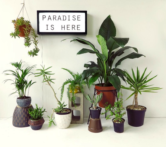 Paradise - urban jungle