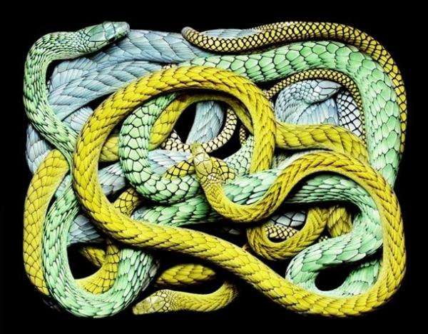 http://2.bp.blogspot.com/-QBFixSt5_K0/TpbO_2fDlxI/AAAAAAAAC_0/LxtMo2y-lzs/s1600/256702%252Cxcitefun-fascinating-snakes-01.jpg