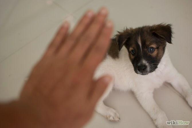 cães têm temperamentos diferentes
