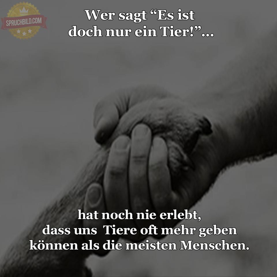 Bevorzugt Sprüche Zum Trösten | Bnbnews.co EV69