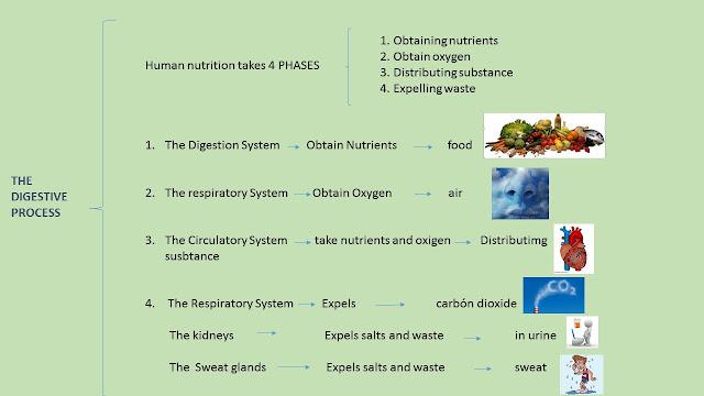 science focus 9 unit 4 pdf