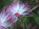 Flores da natureza