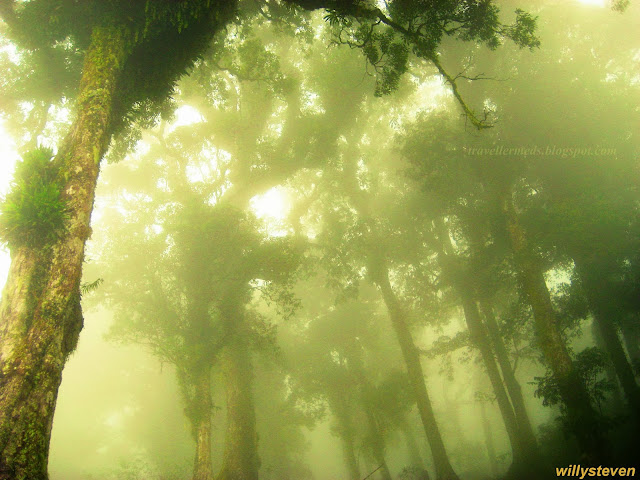 Fatu Ulan Misty Forest, Timor Island - Indonesia