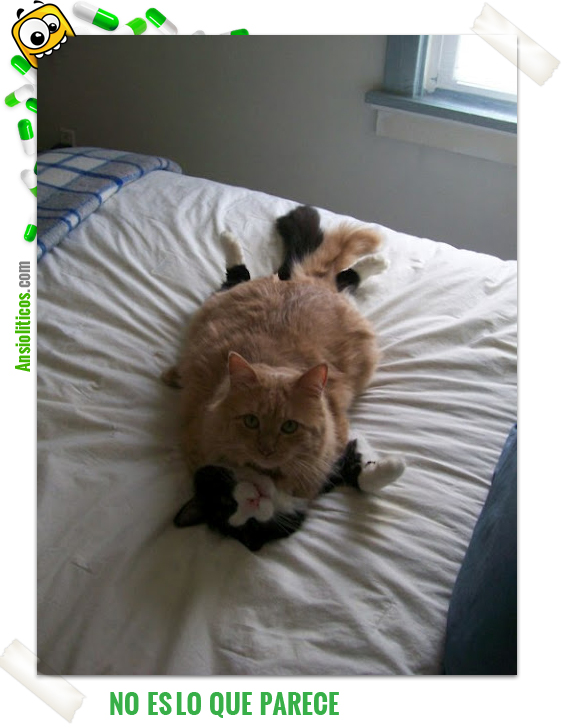 Chiste de Gatos No es lo que parece