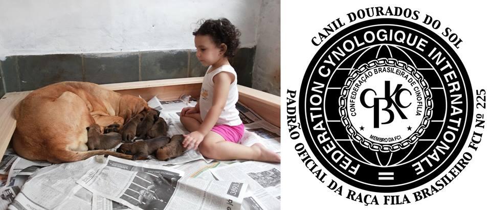 FILA BRASILEIRO - CANIL DOURADOS DO SOL - SÃO SEBASTIÃO / SP