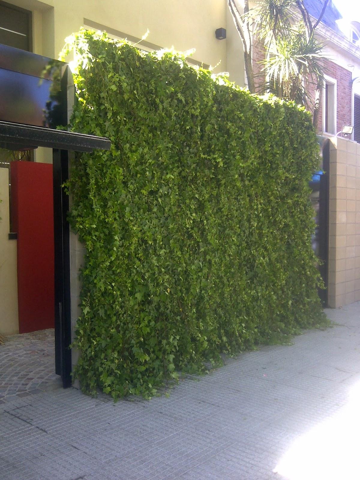 Enredaderas Plantas para paredes verdes