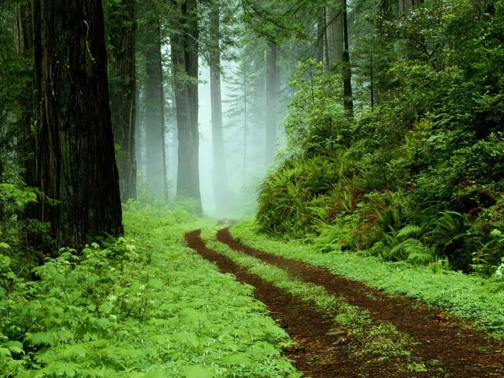 http://2.bp.blogspot.com/-QCHy8EjQ2Io/Td5hALsmkFI/AAAAAAAAEAw/erA9vEsFszc/s1600/vista-wallpaper-forest.jpg