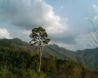 tajindong