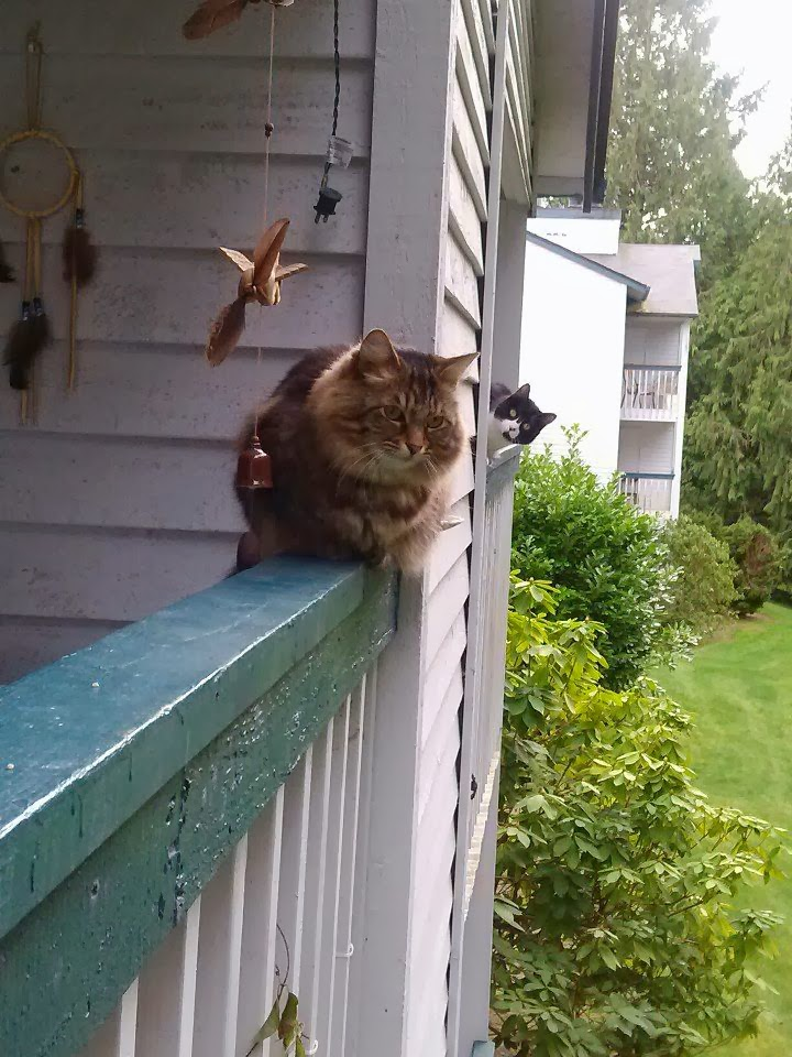 Funny cats - part 92 (40 pics + 10 gifs), cat checking out other cat