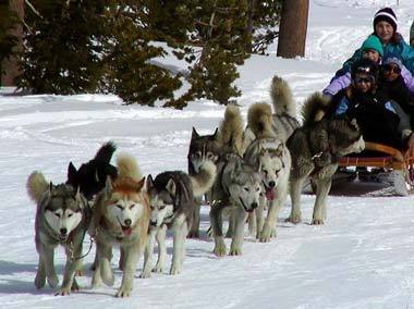 How Do People Train Working Sled Dogs