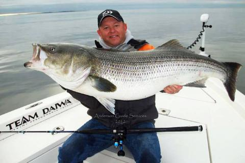 how to catch striped bass in arkansas rivers