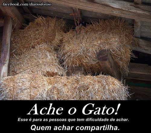 Imagem E Frases Para Facebook Ache O Gato