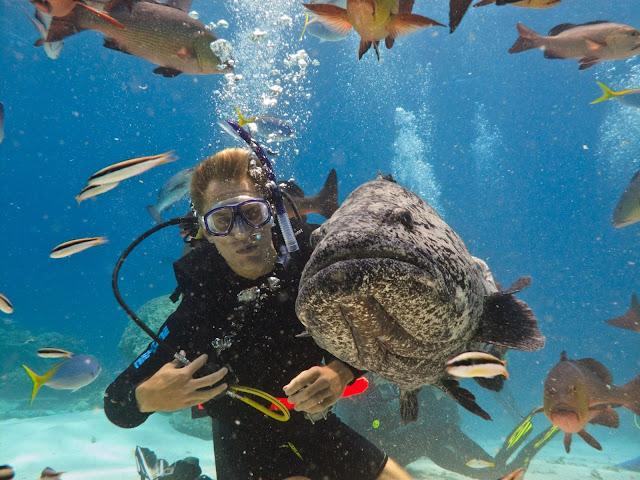 Diving in great barrier reef Australia