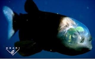 Ikan Berkepala