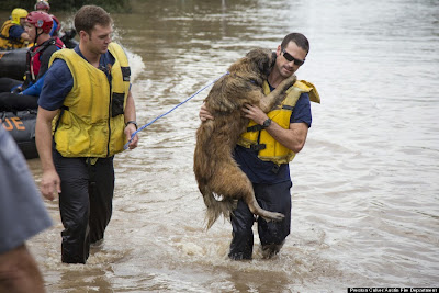 Austin Firefighters Save Dog From Floodwaters