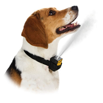 Citronella or lemon anti-bark collars control