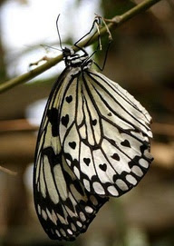 Hearts on a Butterfly!