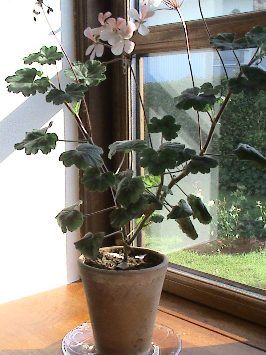 Birgitte på nettet: Stueplanter
