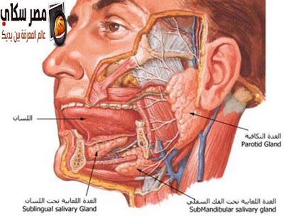 تعرف على الفم ومما يتكون Mouth