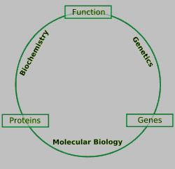 Biochem Blog and Info: Molecular Biology: Relationship with ... on