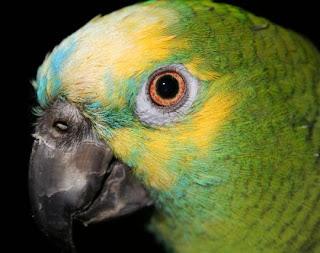como-entrenar-loro-aves-tips-video-consejos-comida-para