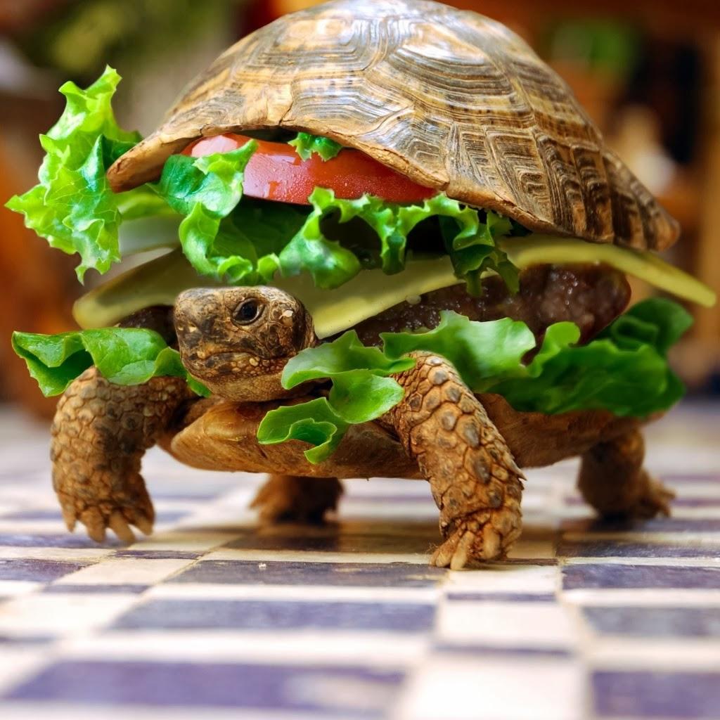 Turtle funny - photo#2
