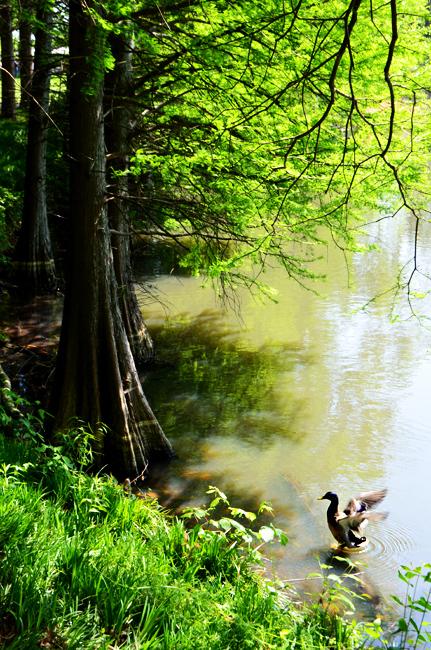 Lake Clara Meer, Piedmont Park
