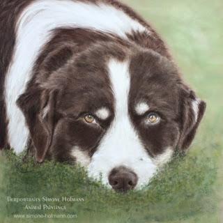 Tierportrait Australian Shepherd, Hundeportrait mit Pastellkreide malen oder zeichnen lassen