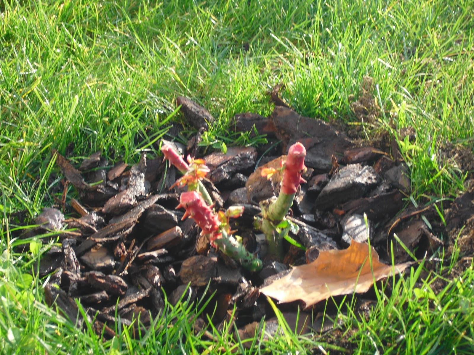 Mon petit jardin en sologne c 39 est le premier premier for Bille en tete alexandre jardin