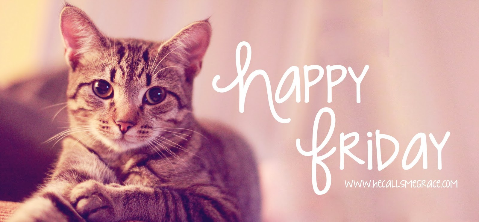 Image result for happy friday with cats images