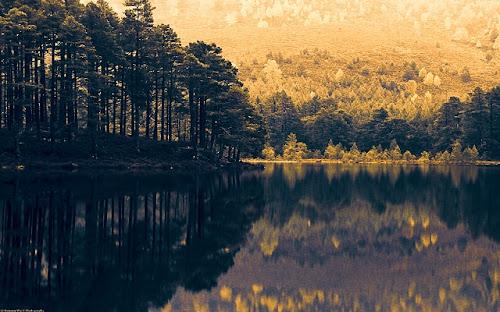Kumpulan Gambar Hutan Lebat Ukuran Besar